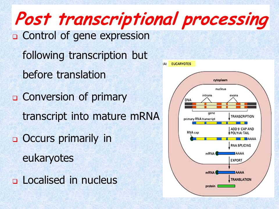 Post transcriptional processing