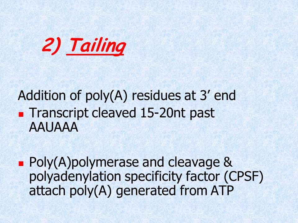 2) Tailing Addition of poly(A) residues at 3' end