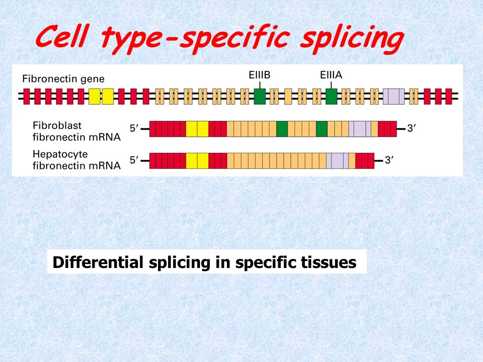 Cell type-specific splicing