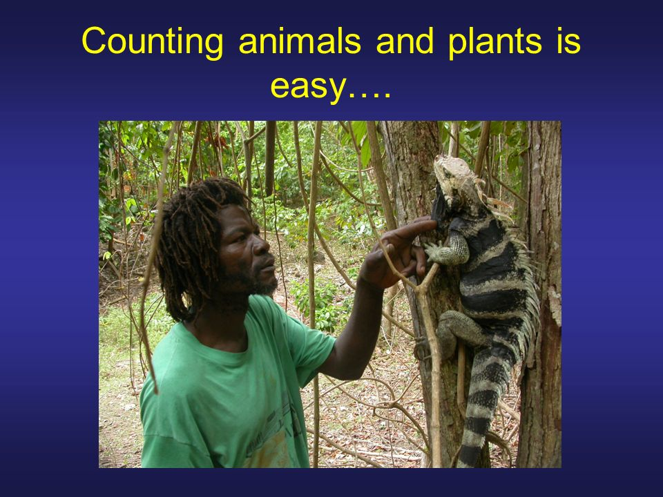 Counting animals and plants is easy….