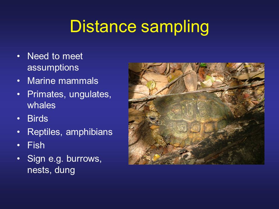 Distance sampling Need to meet assumptions Marine mammals