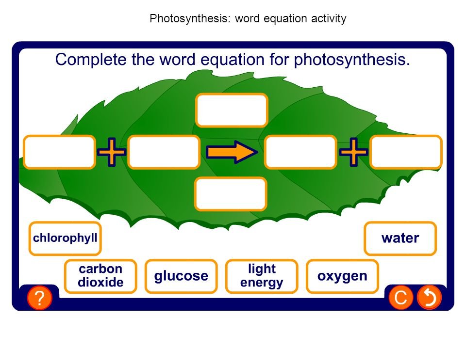 Photosynthesis: word equation activity