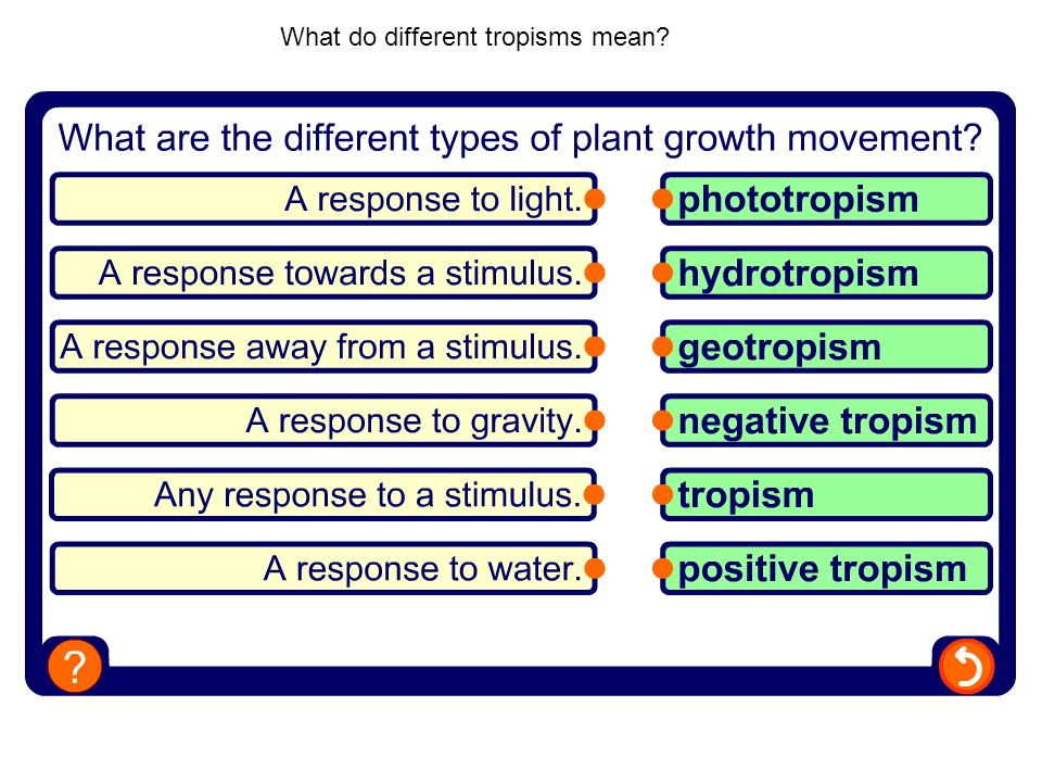 What do different tropisms mean