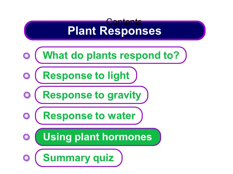 Plant Responses What do plants respond to Response to light