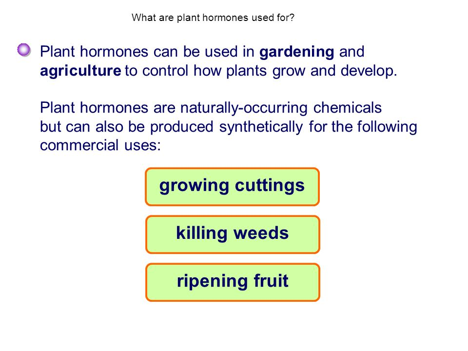 What are plant hormones used for