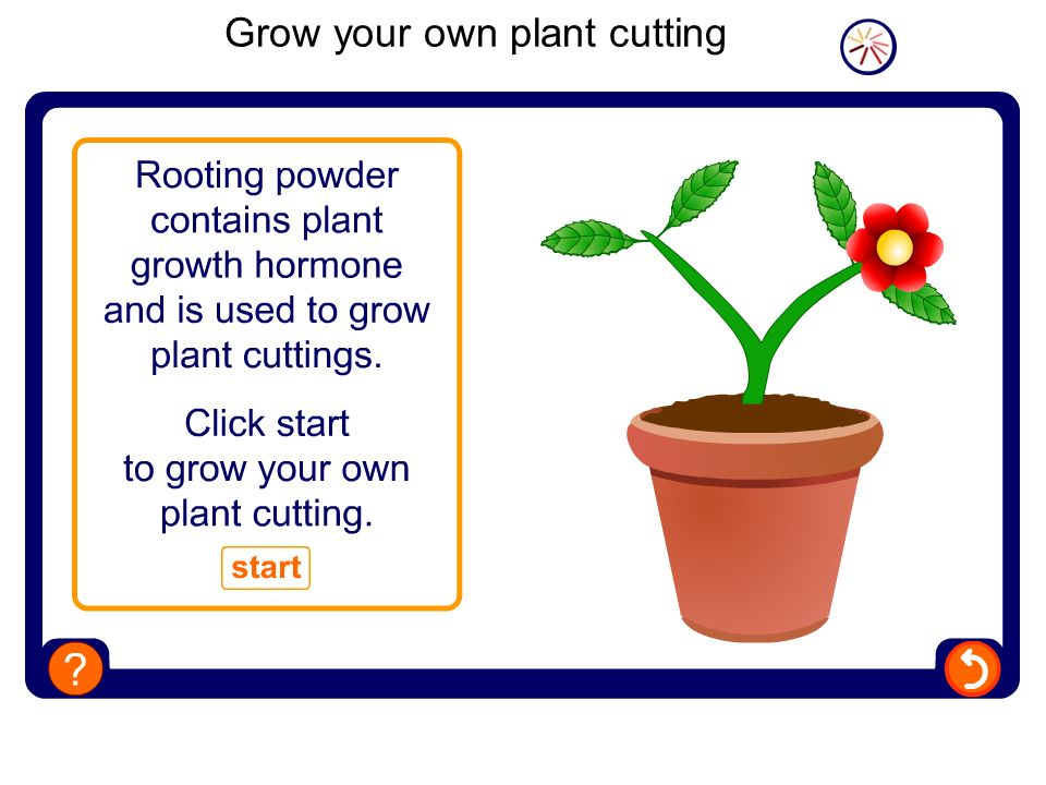 Grow your own plant cutting