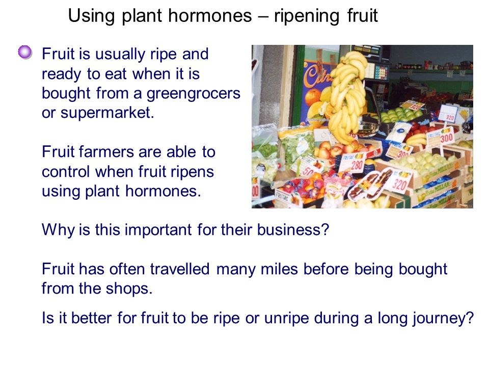 Using plant hormones – ripening fruit