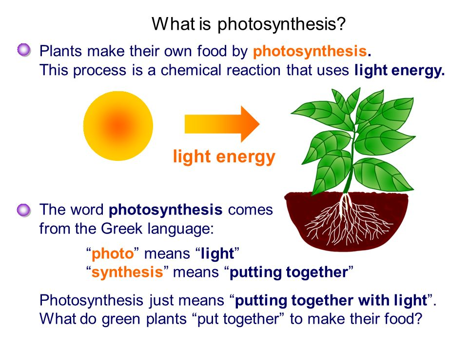 photosynthesis light and plant However, even at the maximum light intensity encountered by photosynthetic organisms (tropical noontime sun, ≈12 × 10 20 photons/m 2 /s), each reaction-center chlorophyll a absorbs about one photon per second, which is not enough to support photosynthesis sufficient for the needs of the plant to increase the efficiency of photosynthesis.