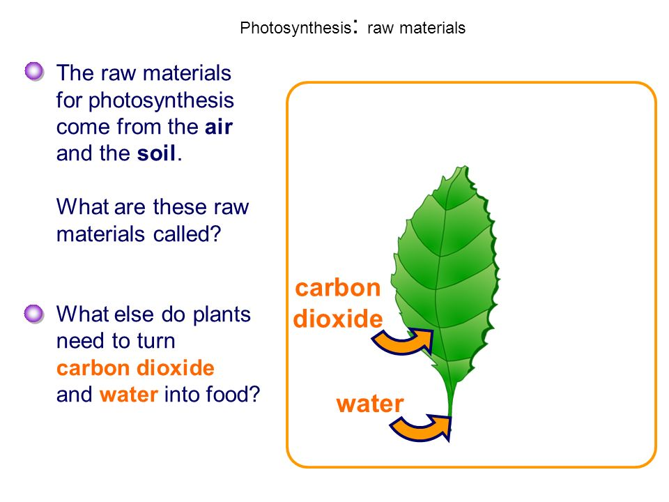 Photosynthesis: raw materials