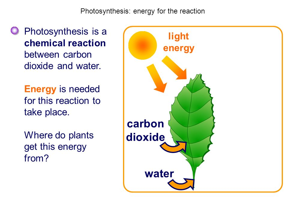 Photosynthesis: energy for the reaction