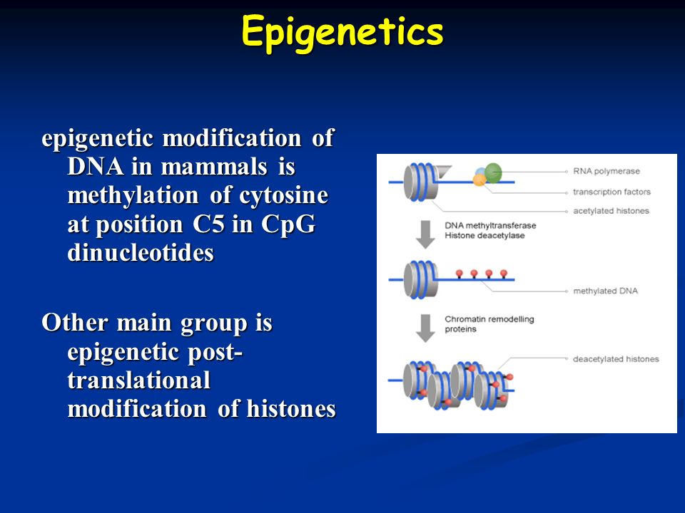 Epigenetics epigenetic modification of DNA in mammals is methylation of cytosine at position C5 in CpG dinucleotides.