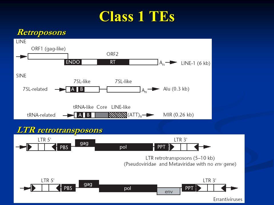 Class 1 TEs Retroposons LTR retrotransposons