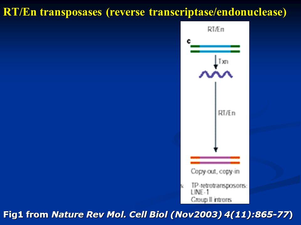 RT/En transposases (reverse transcriptase/endonuclease)
