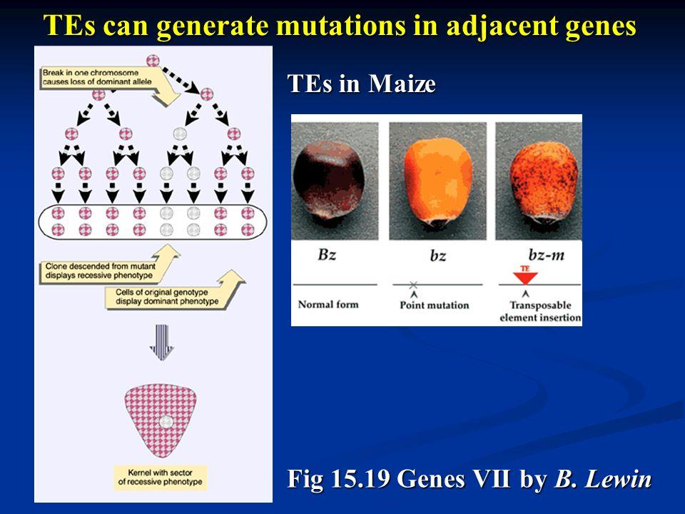TEs can generate mutations in adjacent genes