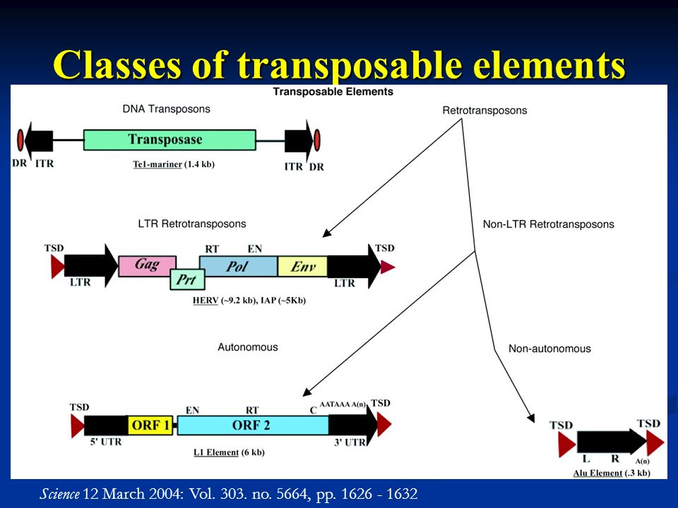 Classes of transposable elements