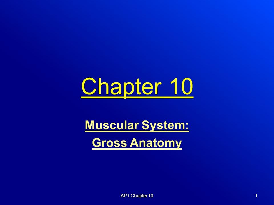 Gross anatomy of muscular system