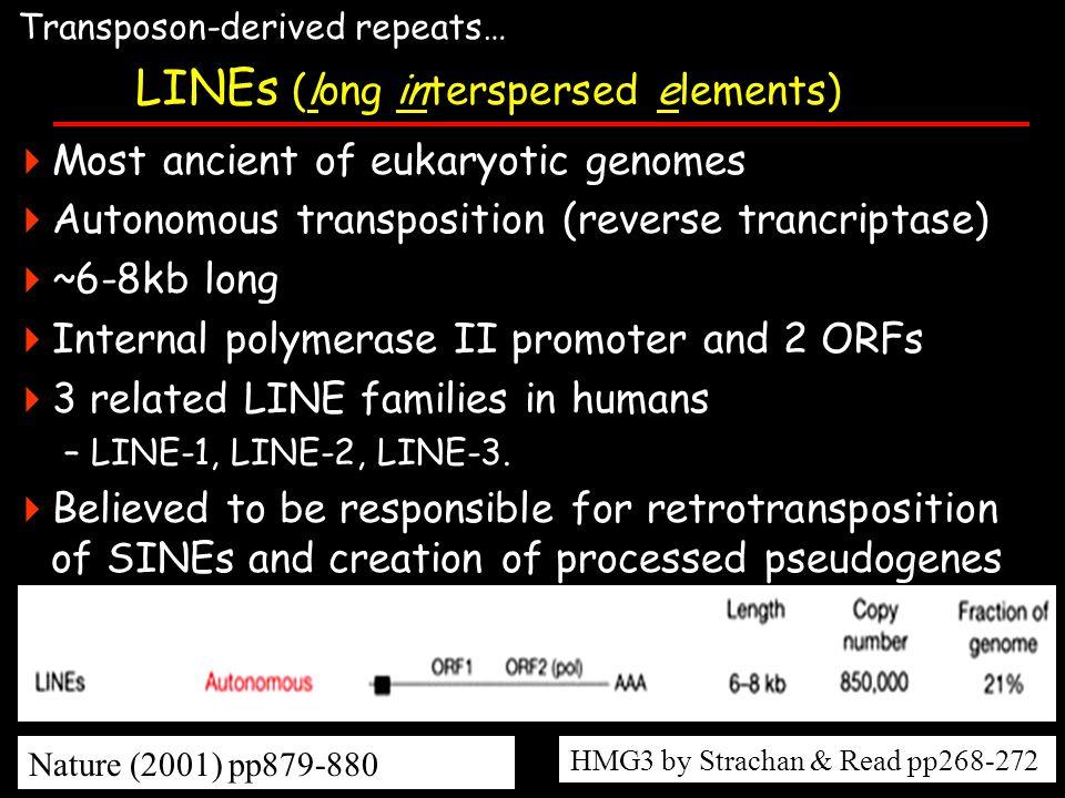 LINEs (long interspersed elements)