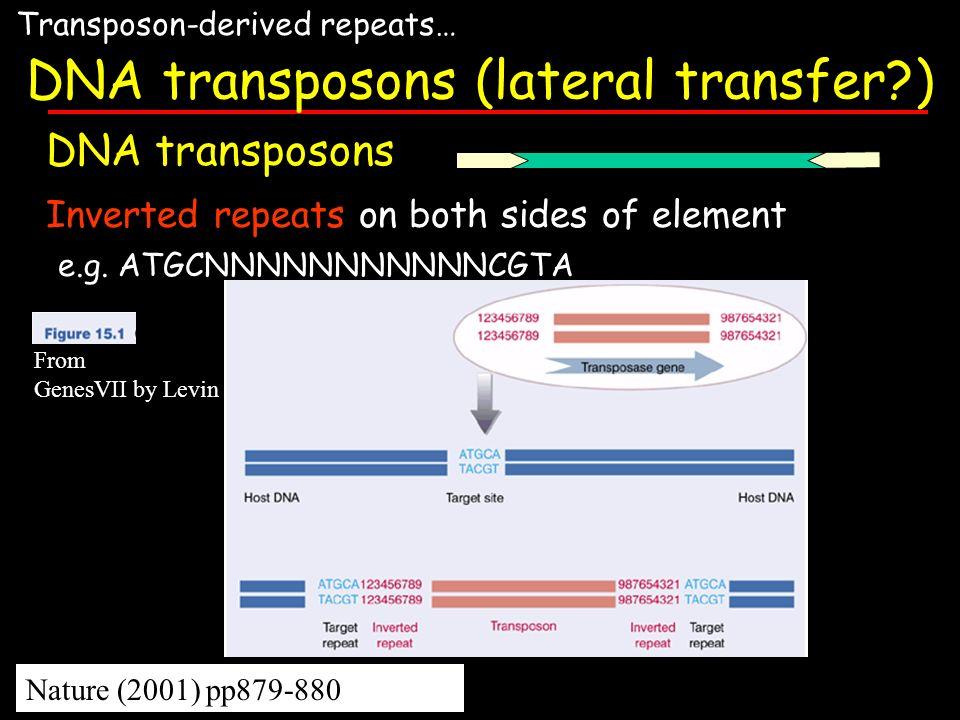 DNA transposons (lateral transfer )
