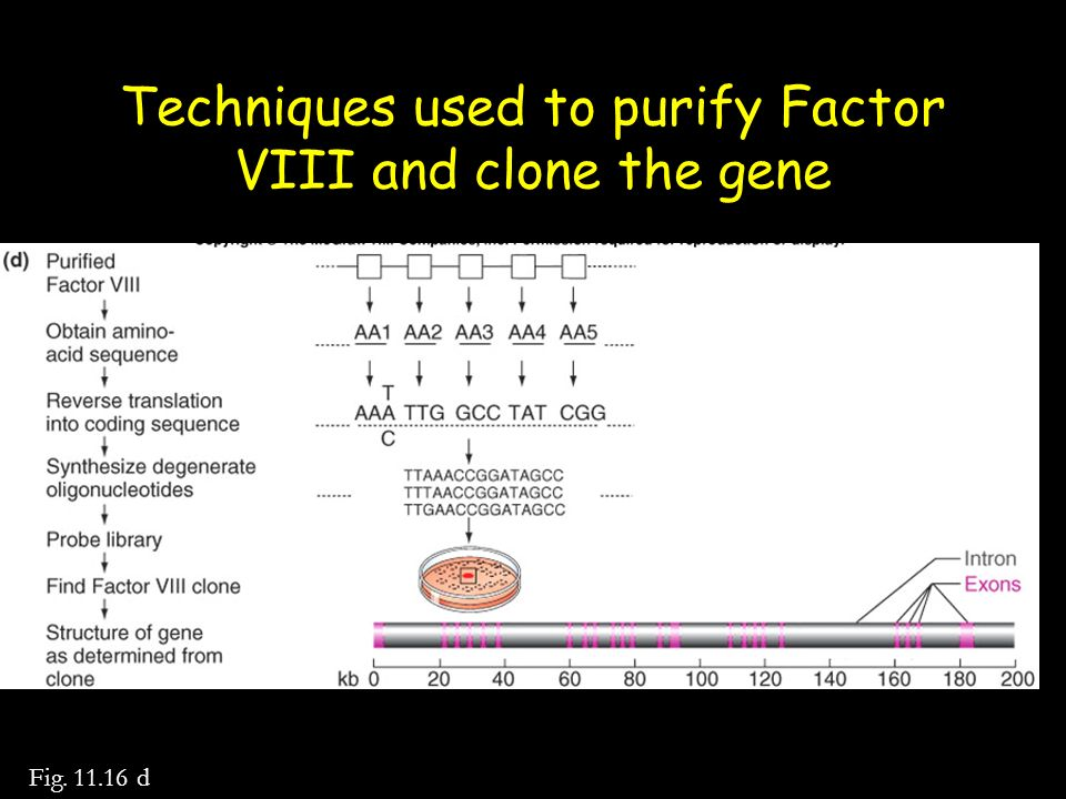 Techniques used to purify Factor VIII and clone the gene
