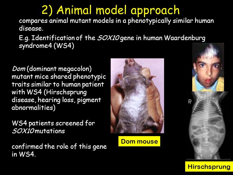 2) Animal model approach