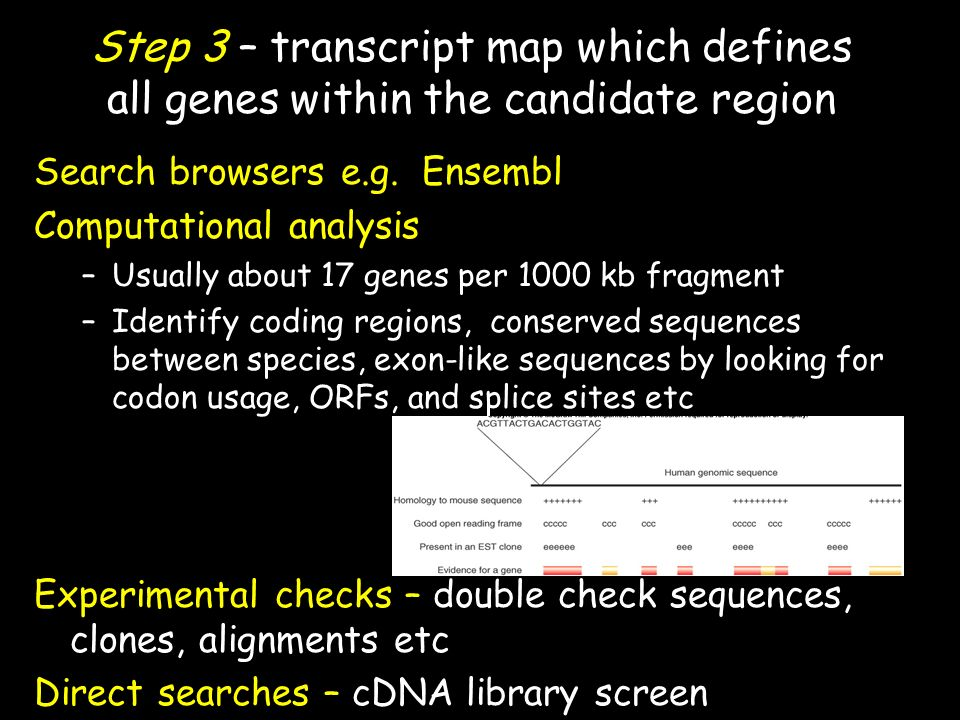 Step 3 – transcript map which defines all genes within the candidate region