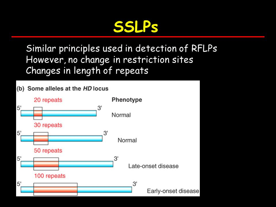 SSLPs Similar principles used in detection of RFLPs