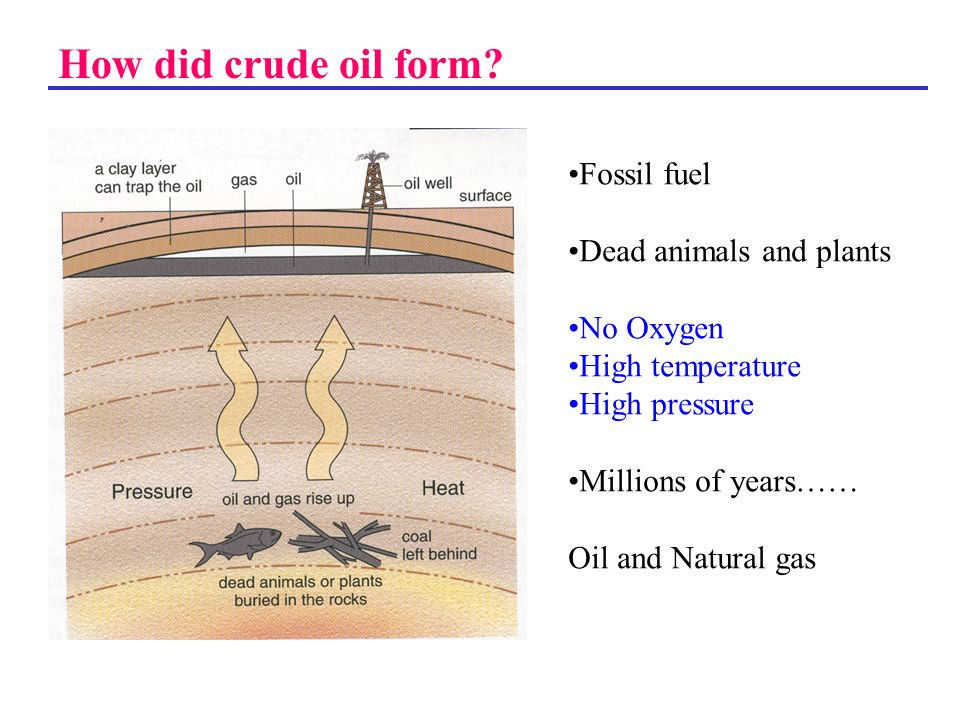 How did crude oil form Fossil fuel Dead animals and plants No Oxygen