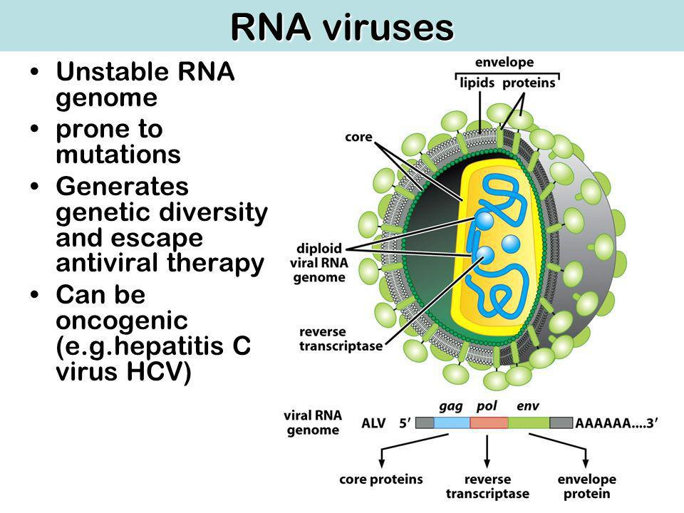 RNA viruses Unstable RNA genome prone to mutations