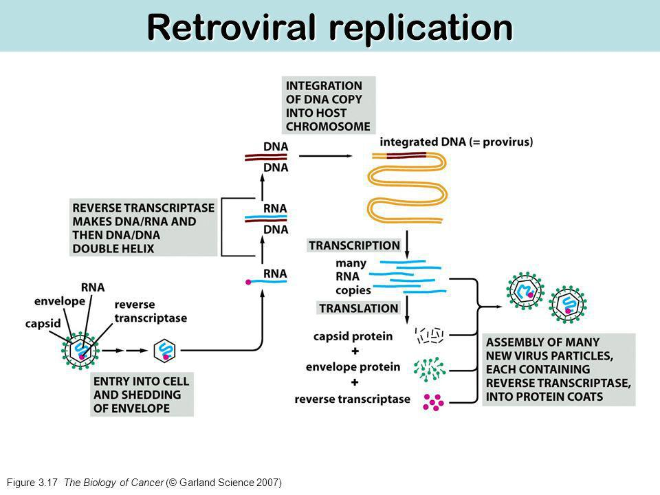 Retroviral replication