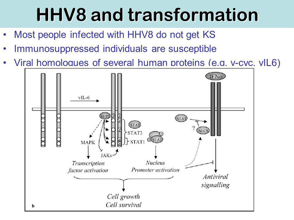 HHV8 and transformation