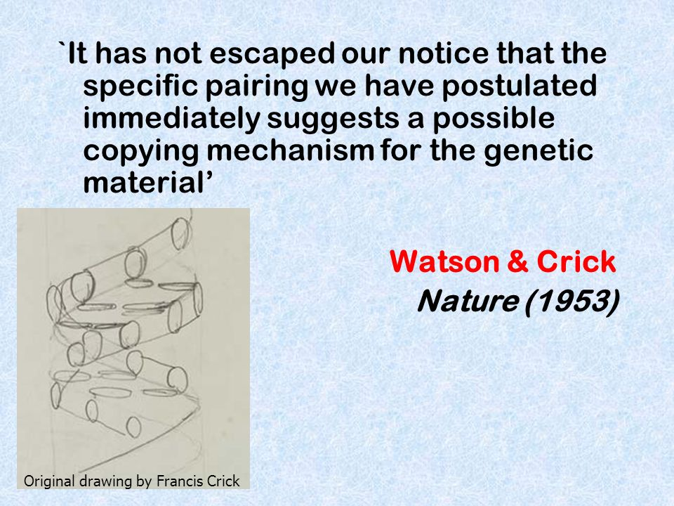 `It has not escaped our notice that the specific pairing we have postulated immediately suggests a possible copying mechanism for the genetic material'