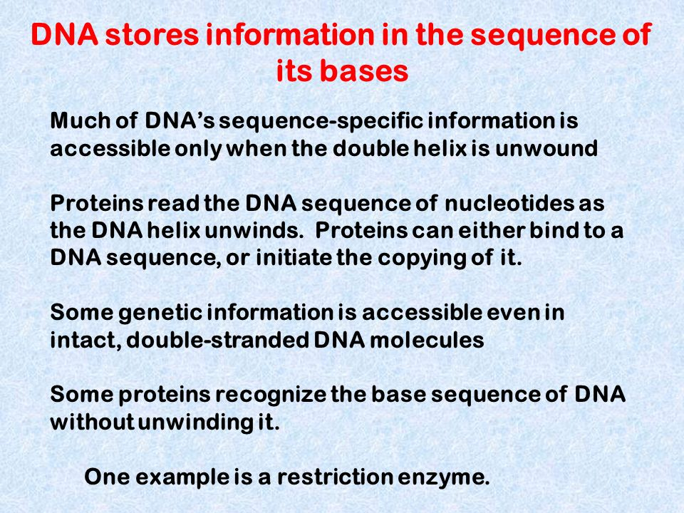 DNA stores information in the sequence of its bases