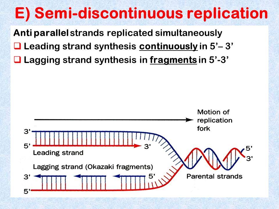 E) Semi-discontinuous replication