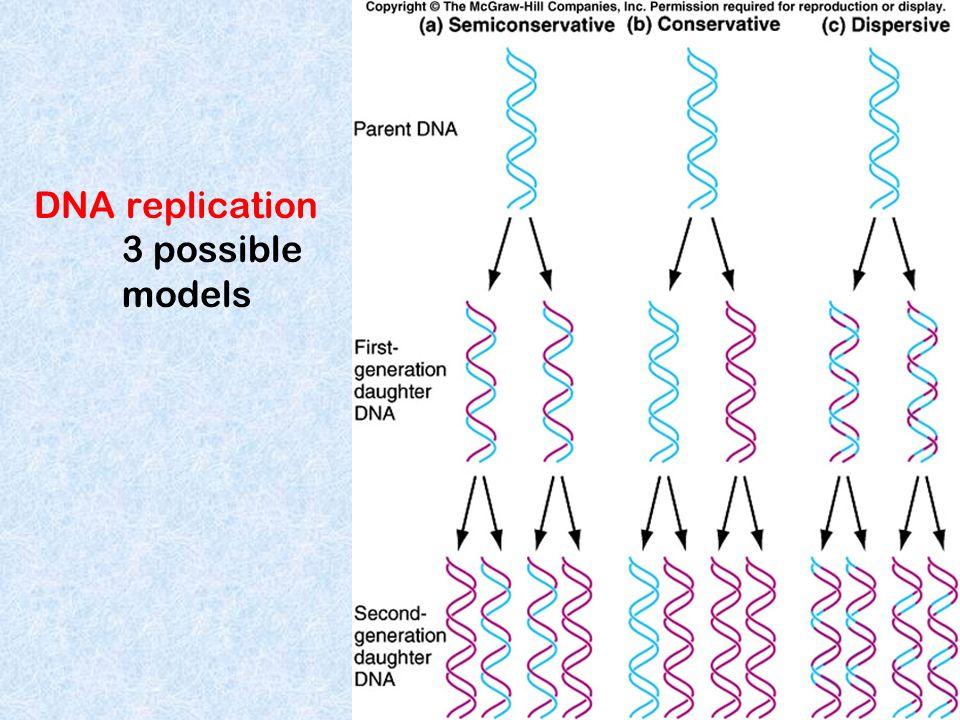 DNA replication 3 possible models