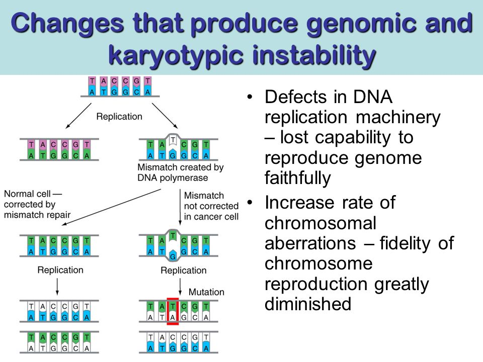 Changes that produce genomic and karyotypic instability