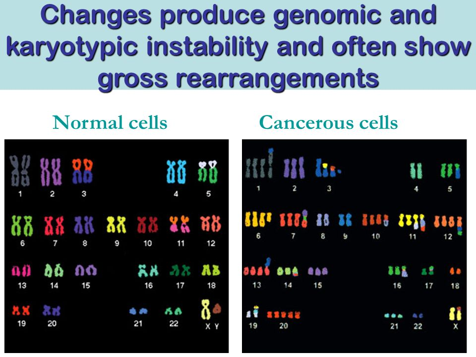 Changes produce genomic and karyotypic instability and often show gross rearrangements