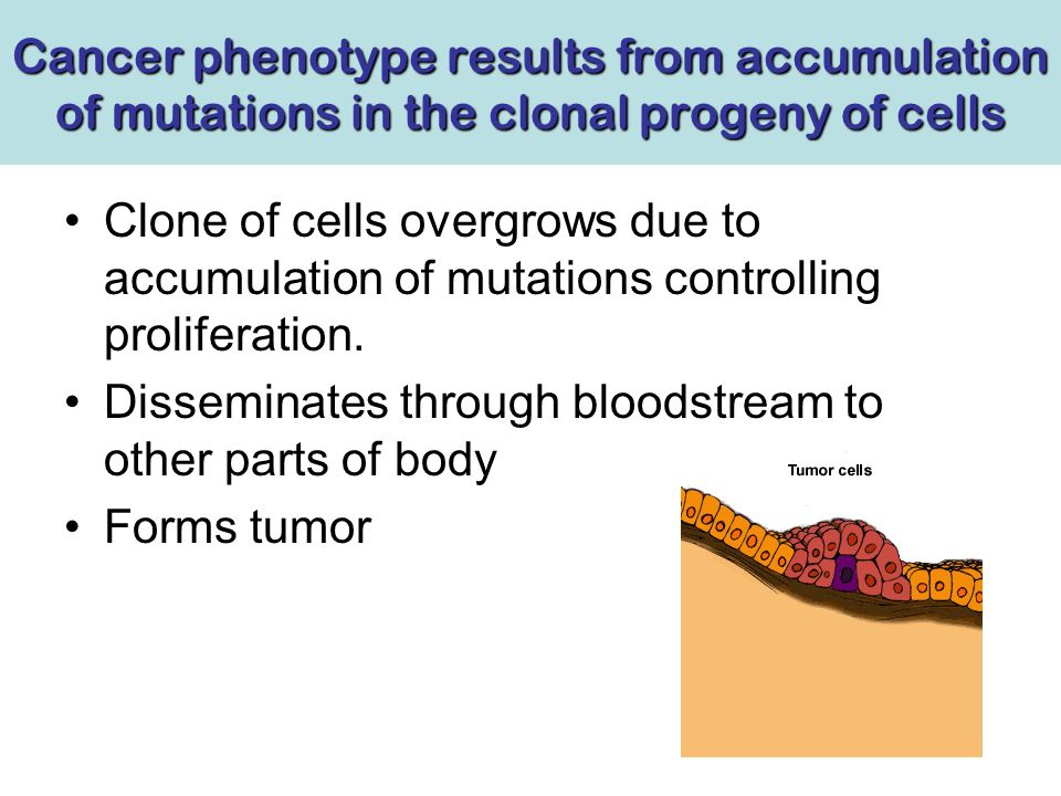 Cancer phenotype results from accumulation of mutations in the clonal progeny of cells