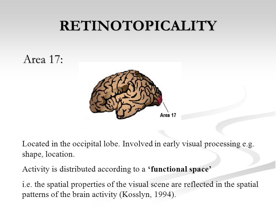 RETINOTOPICALITY Area 17: