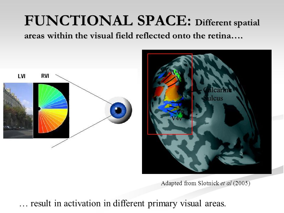 FUNCTIONAL SPACE: Different spatial areas within the visual field reflected onto the retina….