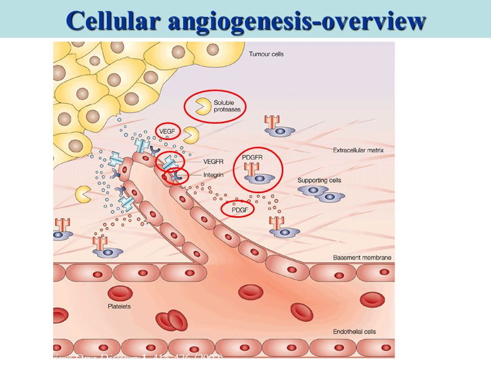 Cellular angiogenesis-overview