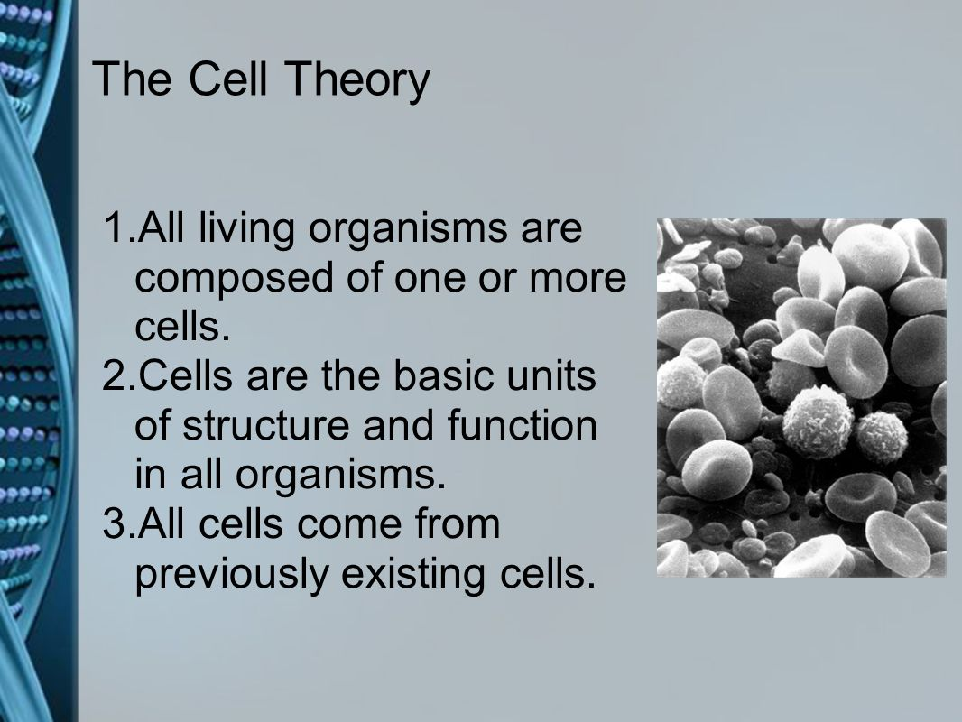Plant and animal cells snc2d ppt video online download the cell theory all living organisms are composed of one or more cells cells are robcynllc Images