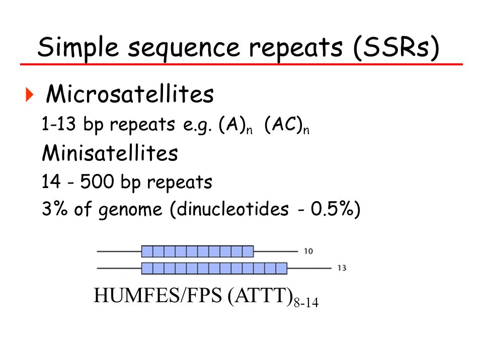 Simple sequence repeats (SSRs)