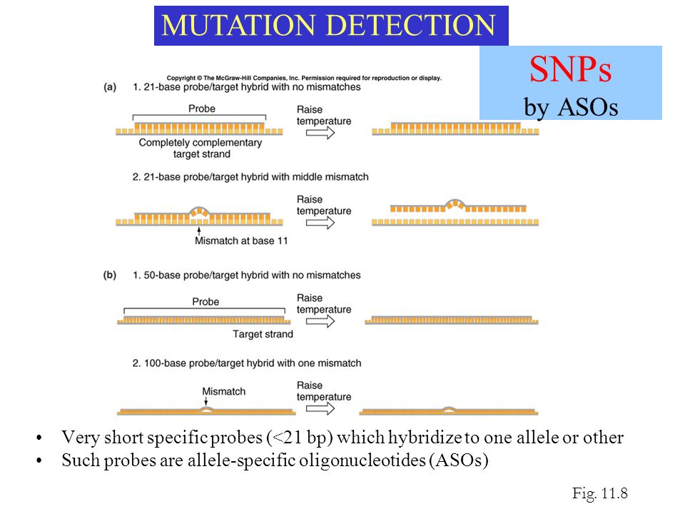 SNPs by ASOs MUTATION DETECTION
