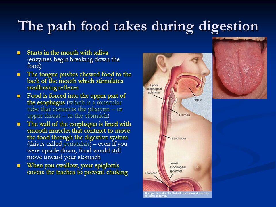the path of food through the Path of food through digestive system diagram together with 91197961180426877 as well as 195062227588486436 moreover 412994228307046815.