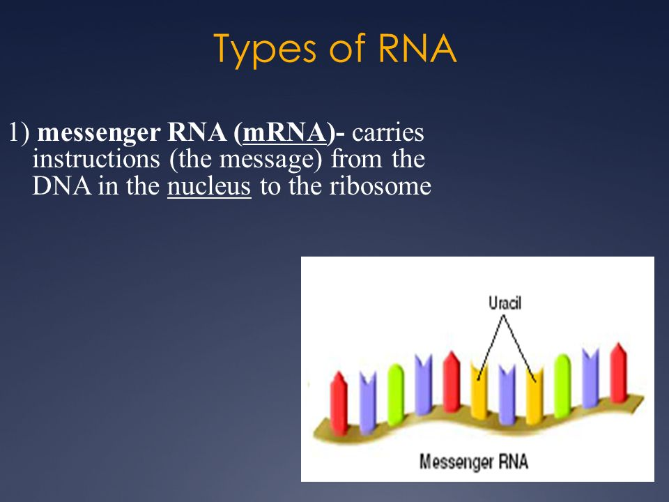 RNA & Protein Synthesis - ppt video online download