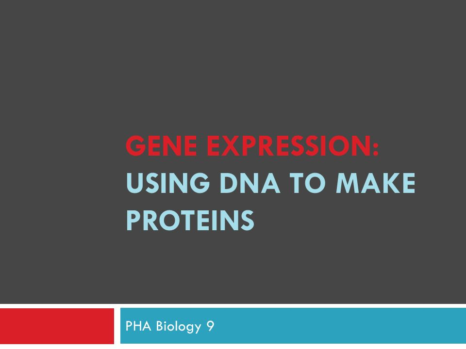Gene expression using dna to make proteins ppt video online gene expression using dna to make proteins pronofoot35fo Choice Image