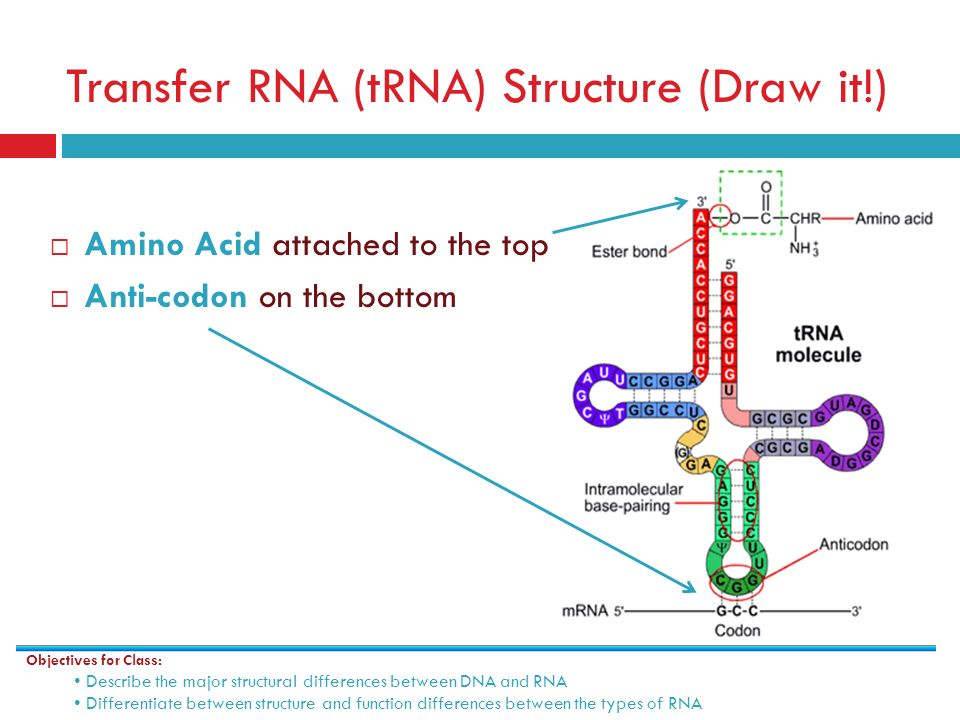 trna structure and function pdf