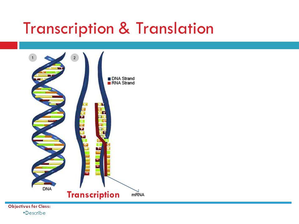 gene expression using dna to make proteins ppt video online download. Black Bedroom Furniture Sets. Home Design Ideas