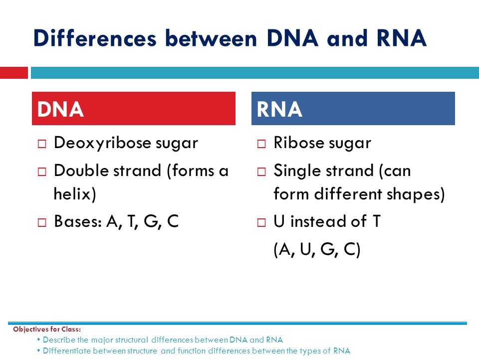 Gene expression using dna to make proteins ppt video online differences between dna and rna pronofoot35fo Choice Image