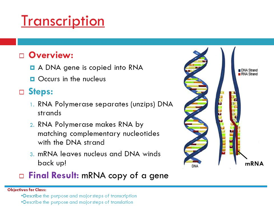 Gene Expression: Using DNA to make proteins - ppt video ...